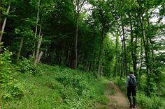 Ein Ausflug in den Biosphärenpark Wienerwald Plants, Orchid Types, Tourism, Tours, Plant, Planets