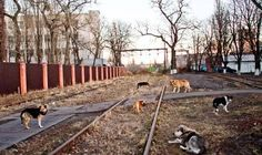 Kiev's dog hunters go on the attack to rid the city of strays: Stop Killing homeless anmimals