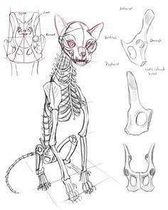 Schoolism - Gesture Drawing Week 5 — Chalk Full of Dreams Cat Skeleton, Skeleton Anatomy, Skeleton Drawings, Cat Reference, Art Reference Poses, Animal Skeletons, Animal Skulls, Cat Skull, Skull Art