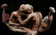 """Gunther Von Hagens """"Body Worlds"""", Milan 2012 - Embrace"""