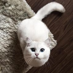 Everyone Is Falling in Love with This Cat with the Most Beautiful Eyes - My Modern Met