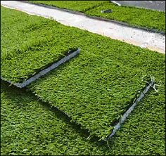 The Environmental Benefits Of Artificial Lawn