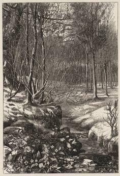 Edward Gurden Dalziel, 'Spring Flowers' published 1869 wood engraving