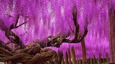 Best Time to Visit Ashikaga Flower Park Options  The view from the observatory is completely stunning and provides you a terrific view of Tokyo city. This landscape is admired by men and women from all over the world!