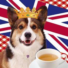 Corgi Facts, Cuppa Tea, Pembroke Welsh Corgi, Corgi Dog, 90th Birthday, Great British, Union Jack, Afternoon Tea, Tea Time