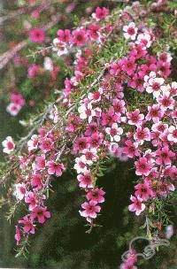 Find This Pin And More On Native New Zealand Plants