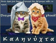 Good Night Sleep Tight, Good Night Sweet Dreams, Cat Toys, Cool Cats, Birthday Wishes, Cat Lovers, Teddy Bear, Funny, Dogs