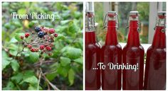 And Here We Are...: How I Made Wild Blackberry Cider