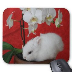 This is so so so so cute baby bunny.  I want it as a red but cool pet. I MEAN IT !! :) Cute Baby Bunnies, Cute Babies, Baby Animals, Cute Animals, Cute Bunny Pictures, Cute Mouse Pad, White Orchids, Cool Pets, Mousepad