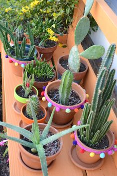 cacti/succulents looking happy after getting watered -design addict mom