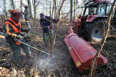 Krebecker übernehmen Pflegearbeiten im Wald selbst