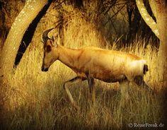 Über Instagram hier eingefügt #kostenlos #Ebook http://ift.tt/2b9uNnZ - #Safari  #malariafrei  #Wildreservate in #südafrika  #southafrica #malariafree #gamereserves #wb1001rb #wbesaesa @jacislodges @pilanesberg_  @rhulani_lodge #wbpinsa @south_africa_through_my_eyes @samara_karoo  #afrika #africa #travelblogger #germanbloggers #safarilodge #feelthebush #luxurysafari @mongenalodge #urlaub