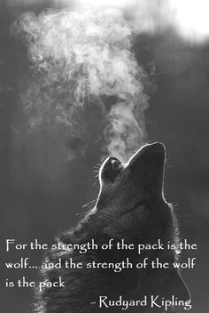 what a powerful quote... i know its not about NCSU but it still fills me with so much pride to be apart of the Pack