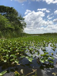 Lush Everglades, Miami