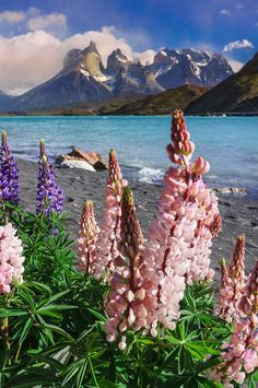 Chile is the most beautiful place I have ever been. I want to go back! torres del paine, Chile