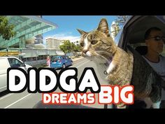 Didga Dreams Big! - What an Amazing Cat!