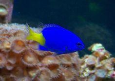 colorful-freshwater-fish.jpg 892×630 pixels