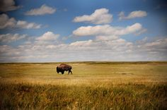Badlands National Park>>>One of the best in the country. I love this place - the prairie winds, the colors, the buffalo - it's perfect.