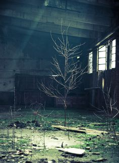 Life in an abandoned factoryby~Marco-art