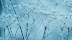 Wallpaper: http://desktoppapers.co/ne20-ipad-snow-winter-flower-blue-nature-bokeh/ via http://DesktopPapers.co : ne20-ipad-snow-winter-flower-blue-nature-bokeh