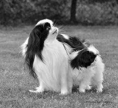 Julia BobkovaJapanese Chin Planet Father and Daughter.
