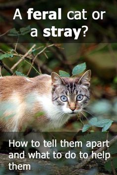 A Feral Cat Or A Stray Cat? How To Tell The Difference – Cat Articles How to tell a feral apart from a stray cat (and why it's so important to be able to do that) Feral Cat House, Feral Cat Shelter, Feral Cats, Alley Cat, Outdoor Cats, Cat Behavior, Cat Facts, Cat Breeds, Cats And Kittens