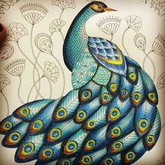 Peacock from Animal Kingdom #animalkingdom #milliemarotta