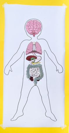 life-size printable human body organs for teaching anatomy to human body system Anatomy for Kids: Printable Bundle for Studying Human Body Systems Human Body Crafts, Human Body Science, Human Body Activities, Human Body Unit, Human Body Systems, Body Parts Preschool, Human Body Organs, Anatomy Models, Human Body Anatomy