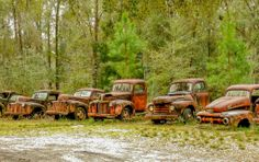 """Harvey's Historic Truck Display"" is located on US 319 in Crawfordville, Florida. This line of rusting old trucks is in an open field on the west side of the road and is one of the most photographed features along the Byway. Photo by Carl & Kitty from Chicago, IL taken during their Shell Point, Florida vacation Feb/Mar, 2013.  Florida's Forgotten Coast.  For vacation rentals in this area, visit www.facebook.com/debsrentals."