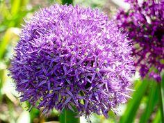Lauter kleine Blüten