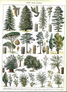 Vintage FOREST TREES poster  Vintage Botanical by FolieduJour
