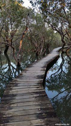 Mangroven, Norden von Neuseeland - Bay of Islands im Juli 2016