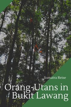 Erfahre hier, wie ich die wilden Orang-Utans auf Sumatra erlebt habe! Rafting, Orang Utan, Box, Movie Posters, Movies, Vacation Package Deals, Indonesia, National Forest, Explore