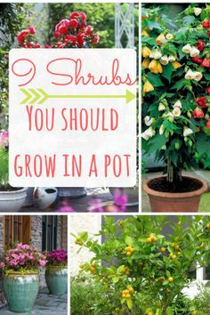 Pretty plants you should grow in pots!