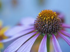 Macro Photograph Video Tutorial - Your composition can help to draw your viewers in.