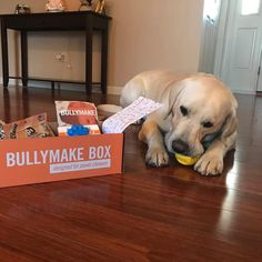 This lab is loving his brand new Bullymake dog toys and treats!   www.bullymake.com