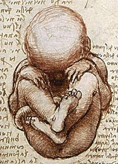 The Human Foetus, drawing by Leonardo da Vinci Michelangelo, Art History, Art Drawings, Horror, Collage, Sketches, Illustrations, Prints, Artwork