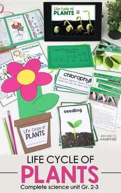 Life Cycle of Plants Unit, Investigations & Plant Life Cycle PowerPoint NGSS Preschool Science, Teaching Science, Science For Kids, Science Activities, Science Experiments, Preschool Learning, Planting For Kids, Creative Teaching, Teaching Ideas