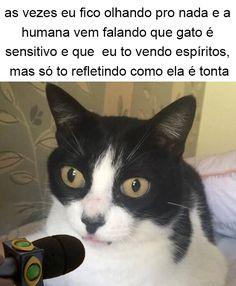 Fica Cãomigo: Outubro 2016 Cat And Dog Memes, Cat Memes, Funny Memes, Memes Status, Pet News, Animal Memes, Really Funny, Cat Day, Laugh Out Loud
