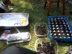 Adding potting soil to the trays.
