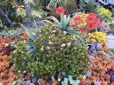 A lively variety of succulents are densely planted in the Peralta landscape, creating a colorful and resilient tapestry despite challenging drought conditions. Succulent Landscaping, Succulents Garden, Garden Plants, Horticulture, Aloe, Mary, Tapestry, Colorful, Cactus