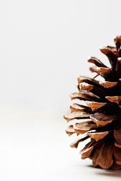 Free stock photo of acorns, fir cone, pinecone