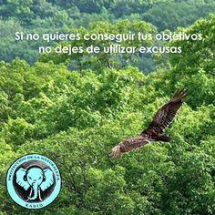 Sintoniza las frecuencias de la Naturaleza y el Ser http://escoladelser.wixsite.com/naturalezaproteccion