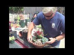 DIY Succulent Dish Garden  Soil mix: 5 parts pumice of perlite  4 parts potting soil 1 part coarse sand