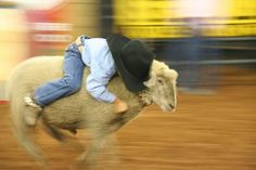 mutton bustin'- how real cowboys & cowgirls start! ;)