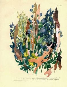 (Untitled) botancial print no.2, 2009 Wardell Milan