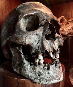 Evil Tattoos, Creepy Tattoos, Skull Anatomy, Anatomy Art, Real Human Skull, Shadow Monster, Skull Reference, Dry Bones, Dark Art Tattoo