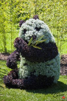 Panda topiary - Plant Sculptures at the Montreal Mosaiculture Exhibition - 50 stunning works created by horticulturist-artists from 25 countries will be displayed at the Botanical Garden from June 22 to September 29, 2013.