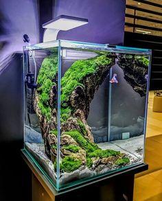 Planted Aquarium, Aquarium Garden, Aquarium Landscape, Betta Fish Tank, Aquarium Fish Tank, Aquarium Architecture, Fish Tank Themes, Water Terrarium, Biotope Aquarium