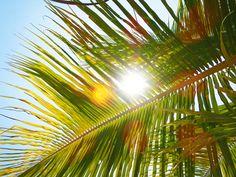 7/29(金)バリ島ウブドのお天気は晴れ。室内温度26.8℃、湿度73%。朝、ザザーっと雨が降りましたが、今はとっても綺麗な青空が広がっています!気持ち良い~♪